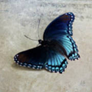 Butterfly Blue On Groovy Poster