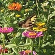 Butterfly Breakfast Poster