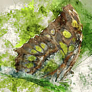 Butterfly Close Up Digital Watercolor On Photograph Poster