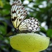Butterfly Cocktail Time Poster