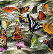 Butterfly Collage Poster