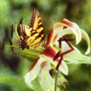 Butterfly Daylily Poster
