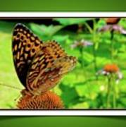 Butterfly For Earth Day Poster