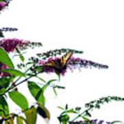 Butterfly Garden II Poster