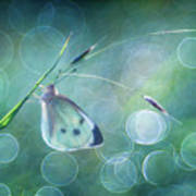 Butterfly Imagination Poster
