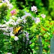 Butterfly In A Garden Poster