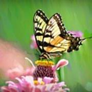 Butterfly In Summer Poster