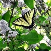 Butterfly In The Lilac No. 1 Poster