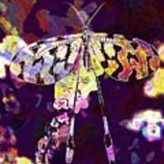 Butterfly Insect Black White  Poster