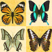 Four Butterfly Montage Poster
