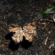 Butterfly Mushroom Poster