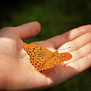 Butterfly On A Childs Hand Poster