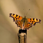 Butterfly On A Stick Poster