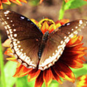 Butterfly On A Sunset Poster