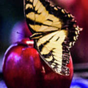 Butterfly On Apple Poster