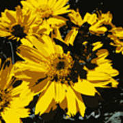 Butterfly On Balsamroot Poster