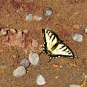 Butterfly On The Beach Poster