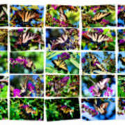 Butterfly Plethora II Poster