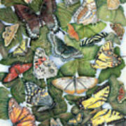 Butterfly Sightings Poster