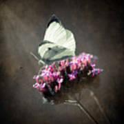 Butterfly Spirit #02 Poster