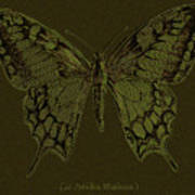 Butterfly Swallow Tail Poster