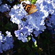 Butterfly V Poster