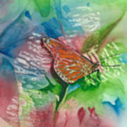Butterfly W Print Poster