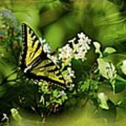 Butterfly Wall Decor Poster