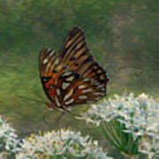Butterfly Waters Poster