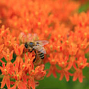 Butterfly Weed Heaven Poster