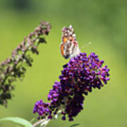 Butterfly With Flowers Poster