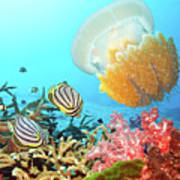 Butterflyfishes And Jellyfish Poster by MotHaiBaPhoto Prints