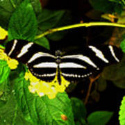 Butterly Poster