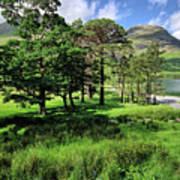 Buttermere Pines Poster