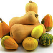 Butternut Squash With Gourds  Poster