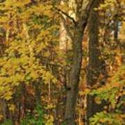 Butterscotch Autumn Poster