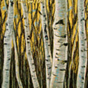 Buttery Birches Poster