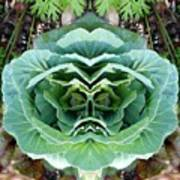 Cabbage Head Poster