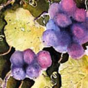 Cabernet Harvest 2 Poster