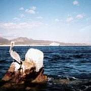 Cabo San Lucas Pelican Poster