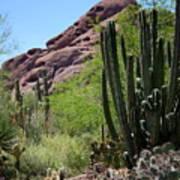 Cacti Garden Poster