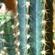 Cactus 3 Poster