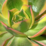 Cactus 4 Poster
