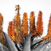 Cactus 5 Poster