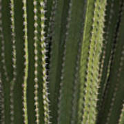 Cactus Abstract Poster