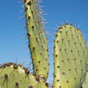 Cactus Against Blue Sky Poster