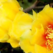 Cactus Bloom 1 Poster