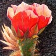 Cactus Cutie Poster
