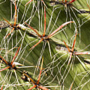 Cactus Diagonal Pattern Poster