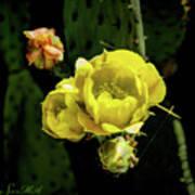 Cactus Flower 07-010 Poster
